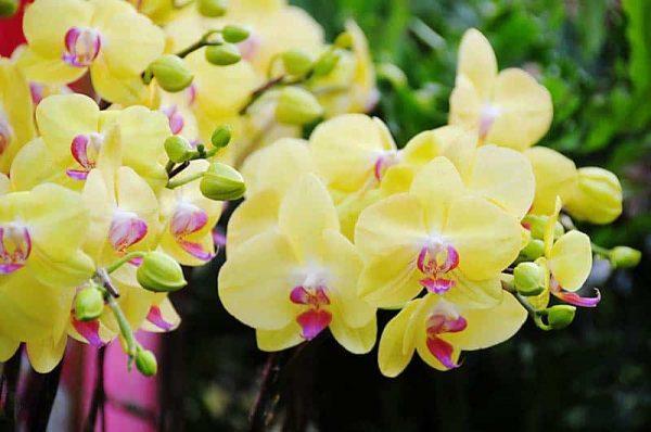 Hoa cưới hoa phong lan sang trọng quý phái